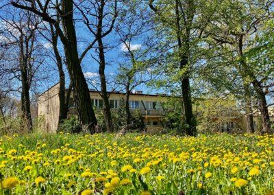 Na pierwszym planie łąka żółtych mniszków. Dalej wysokie drzewa liściaste i za nimi widać jednopiętrowy podłużny budynek.